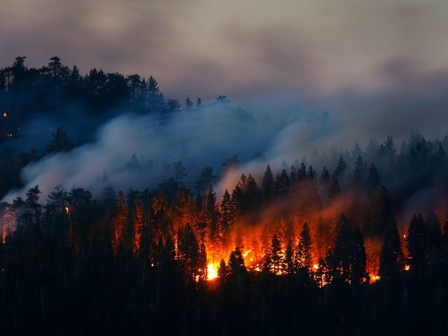 За минувшие выходные в регионе потушили более 30 лесных пожаров