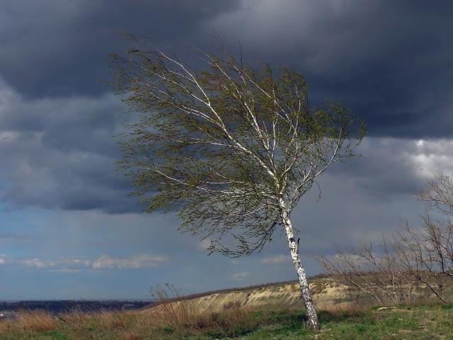 Сегодня в Свердловской области ожидается ветер с порывами до 20 м/с